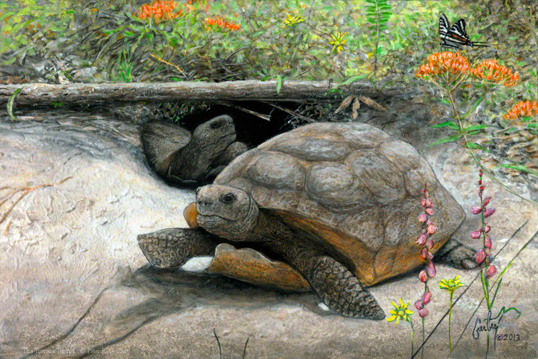 """The Tortoise Tunnel"" © Peter R. Gerbert, Florida Wildlife Art"
