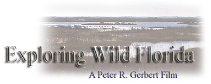 """Exploring Wild Florida"" a Peter R. Gerbert Short Film"